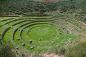 Agriculture experiment of the Incas — Stock Photo