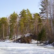 Siberian forest — Stock Photo #5543972