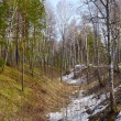 Siberian forest - Stock Photo
