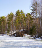 Sibiř les — Stock fotografie
