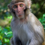 Macaque — Stock Photo #5420149