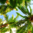 Palm trees — Stockfoto #5631744