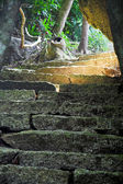 Forêt tropicale — Photo