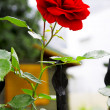 Red rose - Foto Stock