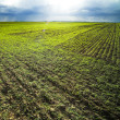 Green field — Stock Photo #5850117