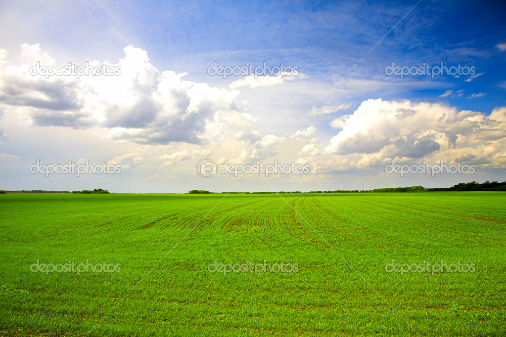 Green agricultural field under cloudy blue sky — Stock Photo #5850089