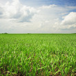 Agricultural field — Stock Photo #5896671