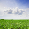 Agricultural field — Stock Photo #6059419