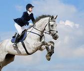 Pferdesport-jumper — Stockfoto