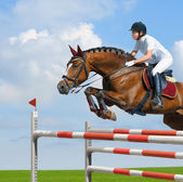 Equestrian jumper - horsewoman and bay mare — Stock Photo