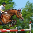 Equestrijumper - horsewomand bay mare — Stock Photo #6000622