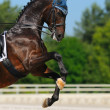 Stock Photo: Dressage