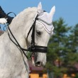 Dressage: portrait of gray horse — Stock Photo #6016319
