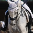Dressage: portrait of gray horse — Stock Photo #6016320