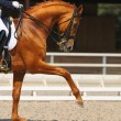 Dressage: portrait of sorrel horse — Stock Photo #6016329