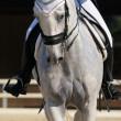 Dressage: portrait of gray horse — Stock Photo #6024242