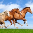 Stock Photo: Three stallions gallop