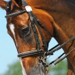 Dressage: portrait of bay horse — Stock Photo #6079826