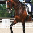 Equestrian sport: dressage - Stock Photo
