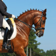 Equestrian sport: dressage — Stock Photo