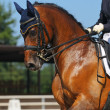 Dressage: portrait of bay horse - Stock Photo