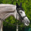 Stock Photo: Equestrian sport - portrait of relaxation horse