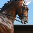 Equestrian sport - portrait of dressage horse — Stock Photo #6244892