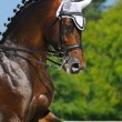 Equestrisport - portrait of dressage horse — Stock Photo #6244894