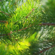 Стоковое фото: Real green natural background