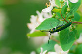 Beetle on a branch of the bush — Stock Photo