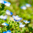small blue flowers — Stock Photo