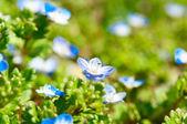 Små blå blommor — Stockfoto