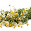Pharmacy daisy — Stock Photo