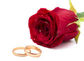 Red rose with wedding rings — Stok fotoğraf