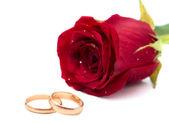 Rode roos met bruiloft ringen — Stockfoto