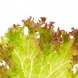 Royalty-Free Stock Photo: Lettuce leaves
