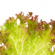 Lettuce leaves - Stockfoto