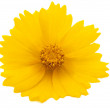 Yellow flower — Stock Photo #5857480