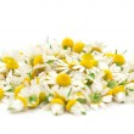 ������, ������: Chamomile flowers