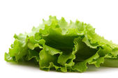 Lettuce leaves — Stock fotografie