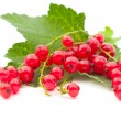 Red currants — Stok fotoğraf