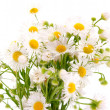 Stock Photo: Bouquet of daisies field