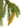 Twig with fir cone — Stock Photo