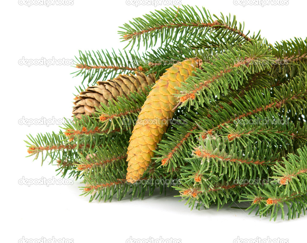 Twig with fir cone on a white background — Stock Photo #6720758