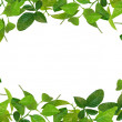 Creative frame made of spring leaves — Stock Photo
