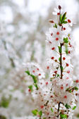 Tree branch with flowers — Stock Photo