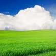 Field of grass and perfect blue sky — Stock Photo #5851924