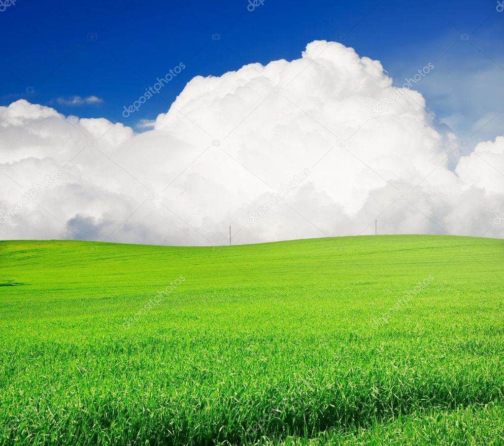Фотообои Field of grass and perfect blue sky