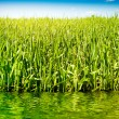 Grass sky and water — Stock Photo