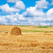 Stock Photo: Farm field